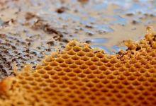Photo of International organizations back Turkish pine honey