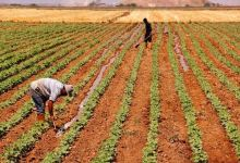Photo of Turkish ministries to allocate idle lands to farmers
