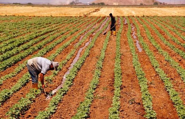 Turkish ministries to allocate idle lands to farmers 1