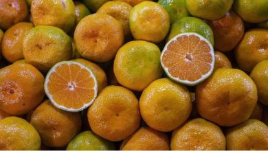 Photo of Turkish Citrus fruit exports has significant contribution to the food industry