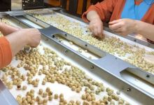 Photo of Turkey: Hazelnut exports reap $2.2B in Sept-July
