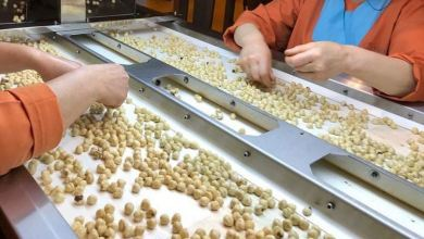 Turkey: Hazelnut exports reap $2.2B in Sept-July 27