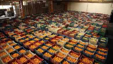 Top five fresh fruits and vegetable exports in Turkey in 2020 5