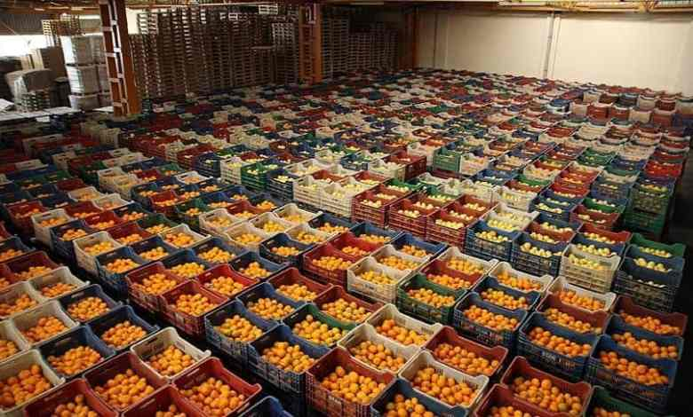 Top five fresh fruits and vegetable exports in Turkey in 2020 1