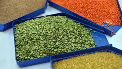 Cereals and pulses sector exports exceeded $7 billion for the first time in Turkey 26