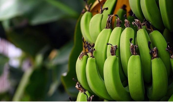 Turkey's banana production up 32.8% in 2020 1