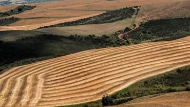 Azerbaijani bank supports Turkish agricultural sector 5