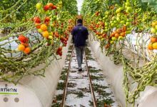 Middle East start-up that grows food in the desert raises $60 million in funding 2