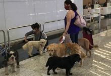Istanbul Airport sets up check-in counter, special room for pets 3