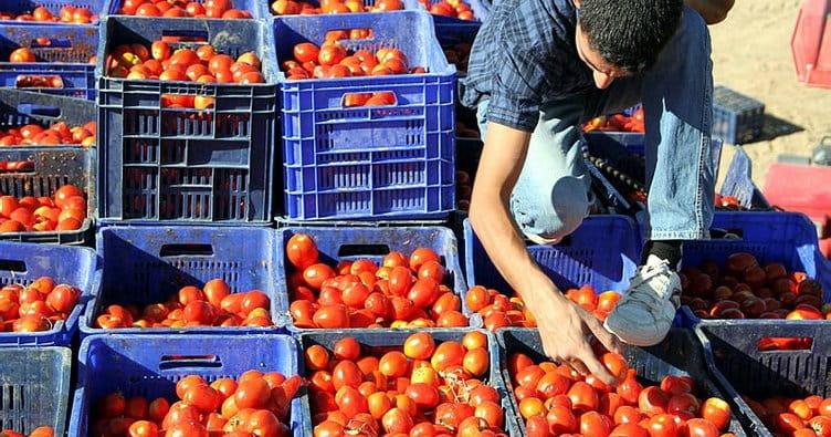 Turkey: Tomato export of $264 million 771 thousand in 9 months 1