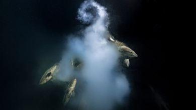 Stunning underwater scene crowned Wildlife Photographer of the Year 2021 winner 7