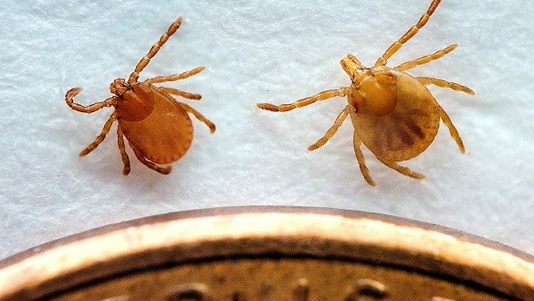 LIVESTOCK AND PET OWNERS SHOULD BE AWARE OF TICK SEASON IN TENNESSEE