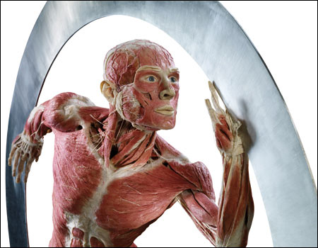 "The image ""https://i1.wp.com/www.bbc.co.uk/manchester/content/images/2008/01/18/bodyworlds_waveroller_450x350.jpg"" cannot be displayed, because it contains errors."