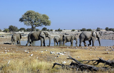 Elephants at a water-hole in Namibia