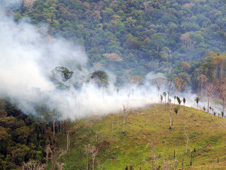 A burning section of the Amazon in Para State, Brazil
