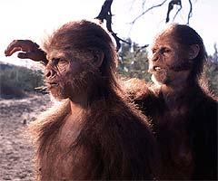 Two Homo habilis