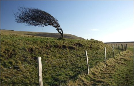 Gió làm cong cây ở Cuckmere Estuary, East Sussex, Anh.
