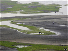 Campos de arroz en Bangladesh.