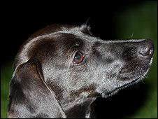 Foto de un perro (BBC)