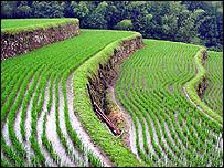 Larangan eskpor diyakini untungkan petani