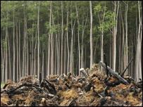 árvores derrubadas