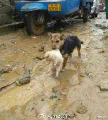 Dog Saves Puppy in Rainstorm