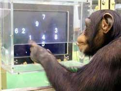"""Image result for monkeys working on a computer"""""""