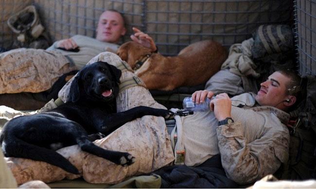 Help Veterans Overcome PTSD