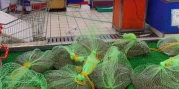 The horror of Tesco selling live, packaged turtles