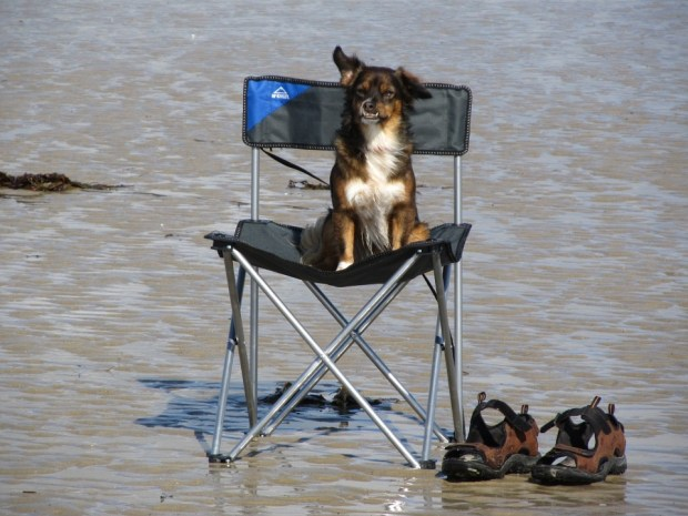 dog on backpacking chairs