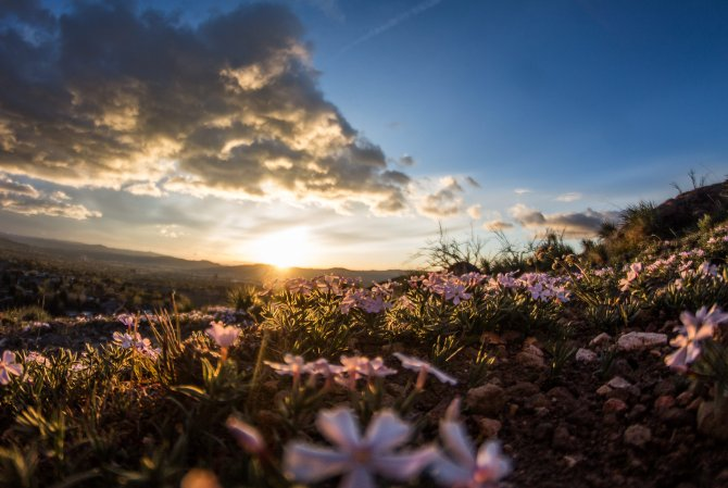 Wolken am Himmel vor Sonnenuntergang mit Blumenwiese