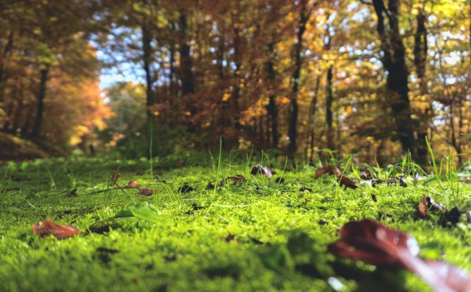 Waldboden aus Ameisenperspektive