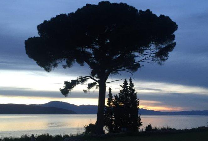 Baum im Sonnenuntergang am Meer Blaufilter