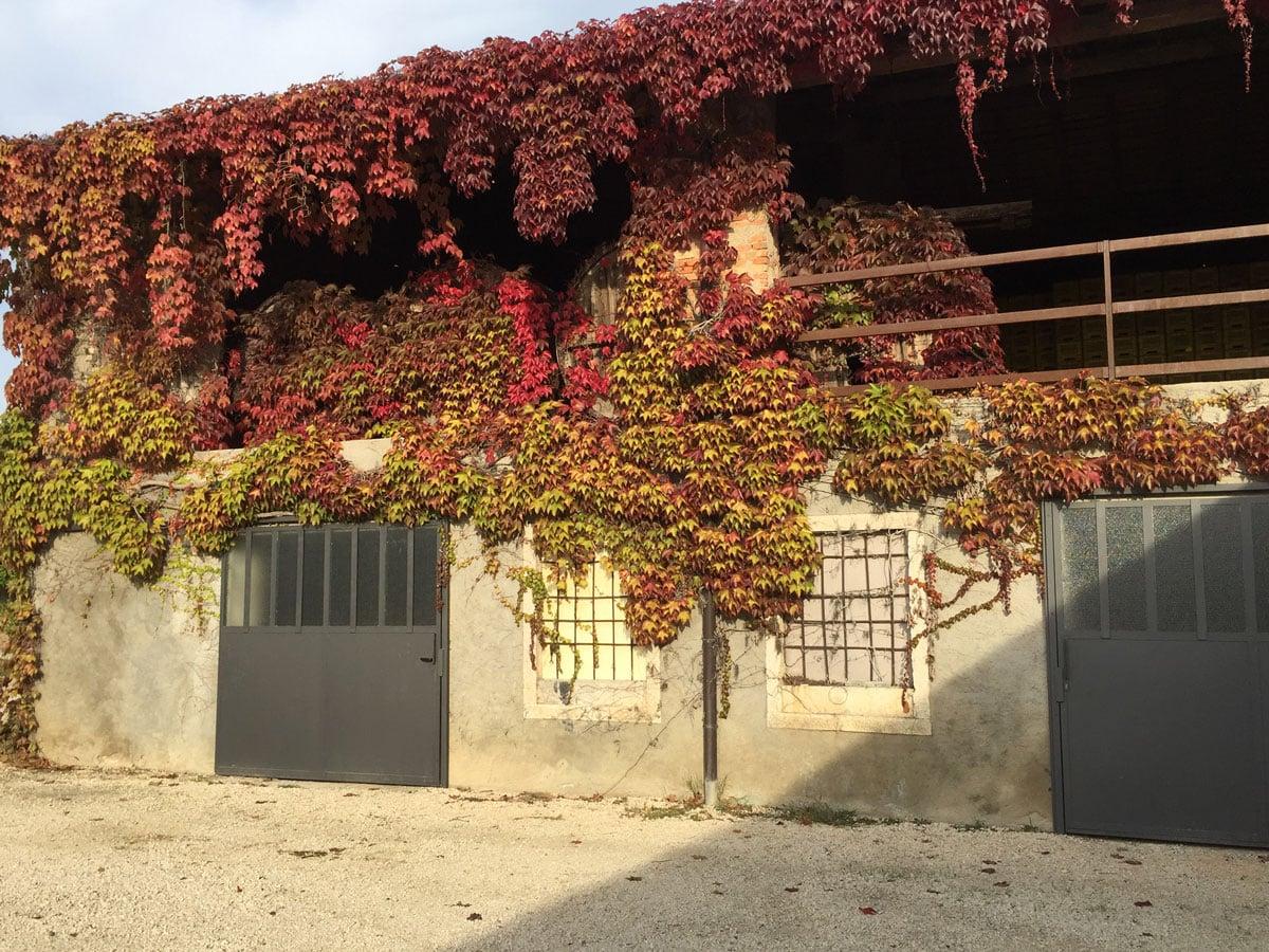 Botti utilizzate per la fermentazione del vino bianco lugana Marangona