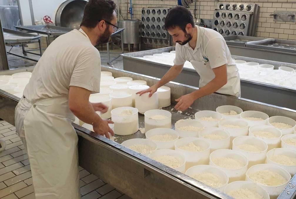 lavorazione del formaggio fresco a mano