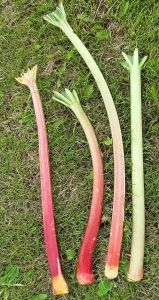 Green and red stalks are equally sweet and nutritious