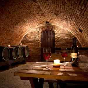 Oller del Mas Cellar Small Group Tour