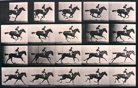 """""""Annie G"""" Galloping, Animal Locomotion by Eadweard Muybridge 1884-6, Collotype. Courtesy of Williams College Museum of Art, Williamstown, Mass."""