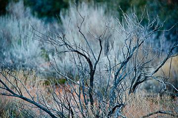 © 2011 Lauren Golden.  All Rights Reserved.