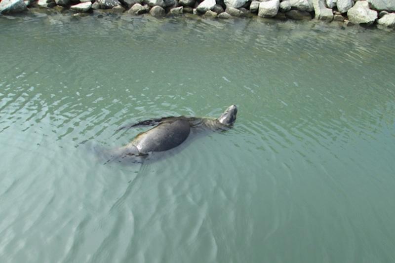 lobo marino cabo san lucas 2