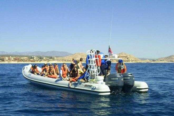 Mexico Whale Tourist Death