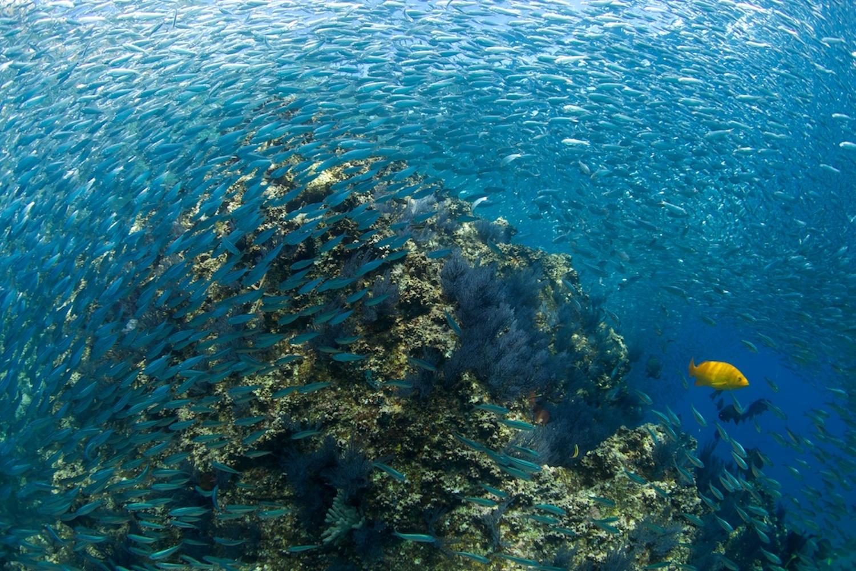 Ubicado en la costa de Baja California Sur, Cabo Pulmo es uno de los mejores arrecifes en México.