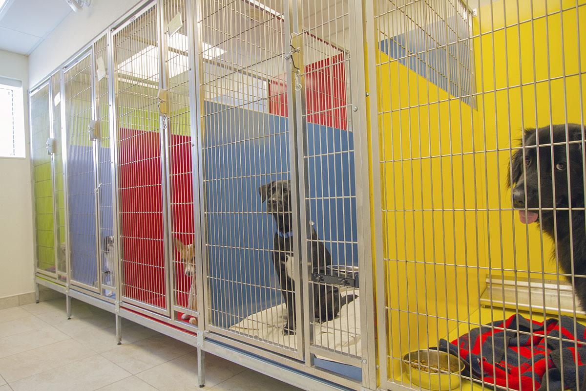 Bda Architecture Pet Boarding
