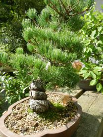 Bonsai Garten Ferch