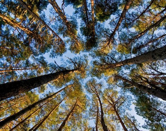 Confor has welcomed reassurance that forestry professionalism will be protected and promoted in new administrative arrangements in Scotland
