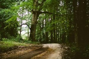 Waldboden Japan, Waldbild