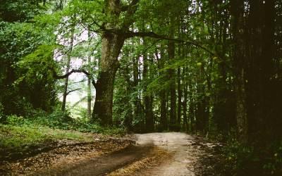 In Japan hilft «Waldboden» gegen Depressionen