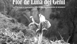 Benamejí, Flor de Luna del Genil