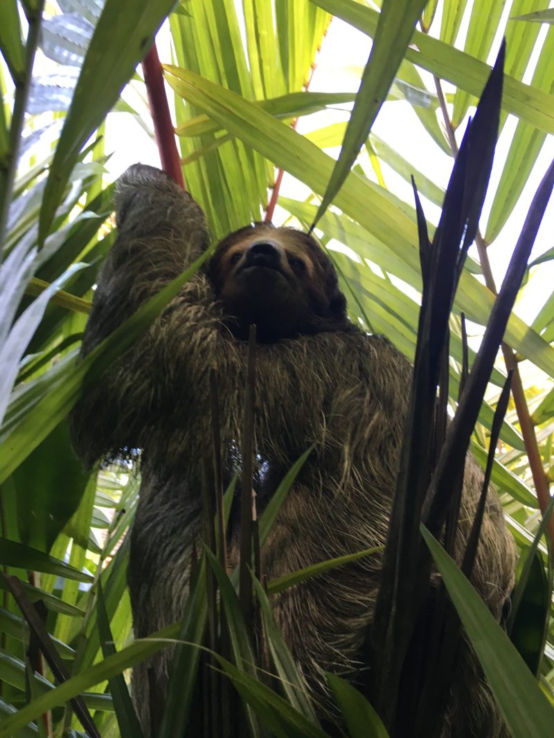 The super swish Nayara Resort Sloth