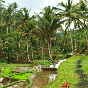 Indonesia, Bali, Ubud, rice fields, green, nature, travel 2016